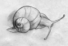 Sketch of a snail. Hand drawn pencil sketch of a snail slowly moving somewhere. Top view Stock Images
