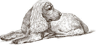 Sketch of a spaniel Stock Image
