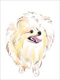 Sketch of spitz Stock Images