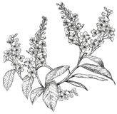 Sketch of spring flowers stock illustration