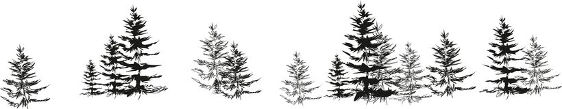 Sketch spruce Stock Photo