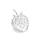 Sketch of a strawberry. Vector illustration.EPS 8 Stock Photography