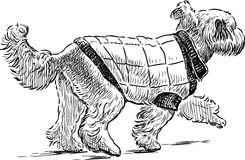 Sketch of a striding lap dog. Vector drawing of a lap dog on a walk vector illustration