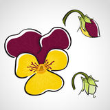 Sketch style flower set - pansy Royalty Free Stock Images
