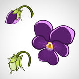 Sketch style flower set - pansy Stock Images