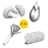 Sketch style vegetables set. Leek , eggplant, broccoli and sweet corn maize piece. Stock Photography