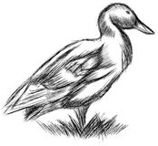 Sketch of a stylized Duck isolated. Artistic sketch of a stylized duck in black and white Stock Photo