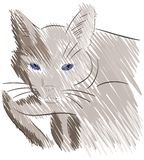 Sketch of a stylized isolated cat Stock Photography