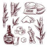 Sketch sugar cane. Sugarcane sweet leaf, sugar plant stalks, rum drink glass and bottle. Sugar manufacturing hand drawn vector illustration