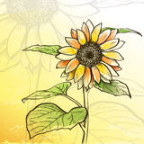 Sketch  sunflower background Stock Photo