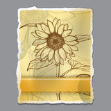 Sketch  sunflower background Stock Photos