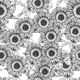 Sketch sunflower, vector vintage seamless pattern Stock Photography