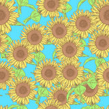 Sketch sunflower, vector vintage seamless pattern Royalty Free Stock Photography