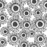 Sketch sunflower Stock Photos