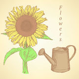 Sketch sunflower and watering can, vector  background Royalty Free Stock Photography