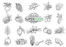 Sketch superfood icons set. Vector hand drawn sketch superfood icons set. Healthy detox natural product of camu camu, garcinia cambogia and maca. Carob, ginger vector illustration
