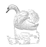 Sketch swan Stock Image