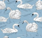 Sketch swan Stock Images