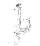 Sketch swan Royalty Free Stock Photography