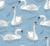 Sketch swan. Vector illustration sketch of a swan swimming Royalty Free Stock Photos