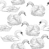 Sketch swan Royalty Free Stock Images