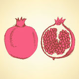 Sketch tasty pomegranates in vintage style Stock Photography