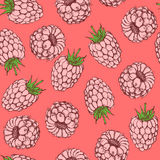 Sketch tasty raspberry in vintage style Stock Photos