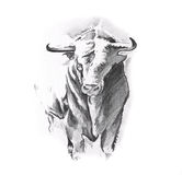 Sketch of tattoo art, bull Stock Photo