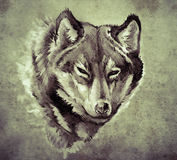 Sketch of tattoo art, Illustration of a Wolf head Royalty Free Stock Images