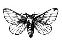 Sketch tattoo butterfly swallowtail Stock Photography