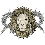 Sketch of tattoo lion with horns Stock Image