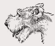 Sketch of the terrier head Stock Images