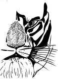 Sketch of tiger face. Vector image, drawn by hand. stock image