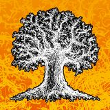 Sketch of a tree. Sketched black and white tree on the orange background vector illustration
