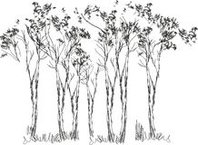 Sketch of trees Stock Image