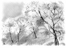 Sketch of the trees Royalty Free Stock Photos