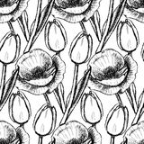 Sketch tulip and poppy Royalty Free Stock Photography