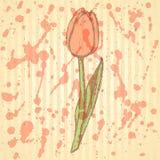 Sketch tulip, vector vintage background Stock Photo