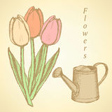 Sketch tulip and watering can, vector  background. Sketch tulip and watering can, vector vintage background Royalty Free Stock Images