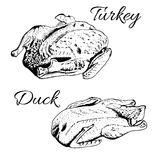 Sketch of turkey and duck. Sketch of stuffed roasted turkey and duck. Vector image for cooking, holiday meals christmas, thanksgiving , recipes, gastronomy Royalty Free Stock Photography
