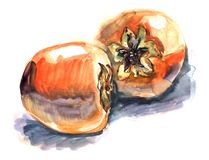 Sketch of Two orange fruit persimmons with dried up fruits lie i vector illustration