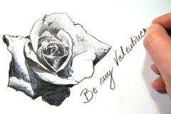 Sketch Of A Valentine Rose Stock Photography