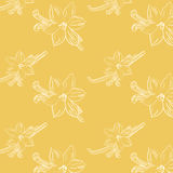 Sketch of vanilla flower on light-yellow background square composition Royalty Free Stock Photos