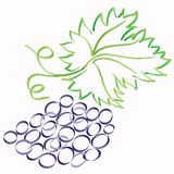 Sketch vector grape Stock Photography