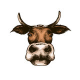 Sketch vector illustration isolated white cow Stock Photo