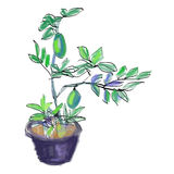 Sketch vector of lemon tree Stock Photos