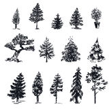 Sketch vector trees 1 Royalty Free Stock Photos