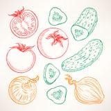 Sketch vegetables Stock Images
