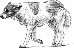 Sketch of a walking dog Royalty Free Stock Images