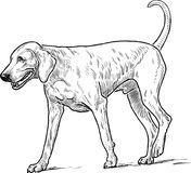 Sketch of a walking hound Stock Photo
